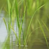 『ゼロからの米作りで美味しい笑顔届け隊〜10年ぶりの田植え〜6月30日』