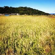 ゼロからの米作りで美味しい笑顔届け隊〜収穫のとき〜